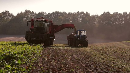 beet harvesting using combine and tractor