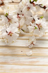 Spring blossom (oriental cherry, apple tree)