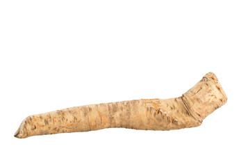 Meerrettich, Horseradish, Armoracia rusticana