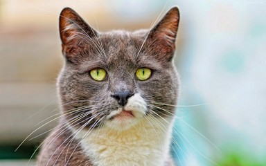 Gato de ojos verdes 1