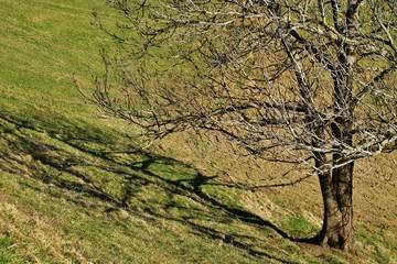 Baum im Vorfrühling