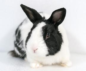 Rabbit closeup on white background