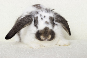 rabbit looking