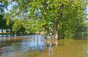Summer flood