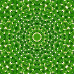 Pattern of green cactus with needles