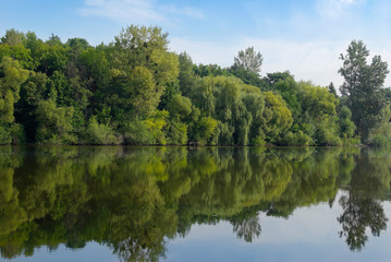 Young green forest reflected in the lake water