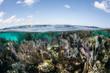 Leinwanddruck Bild - Caribbean Coral Reef