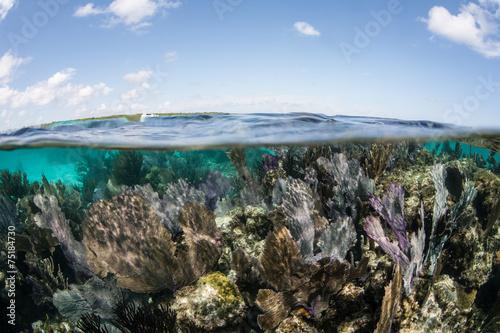 Leinwanddruck Bild Caribbean Coral Reef