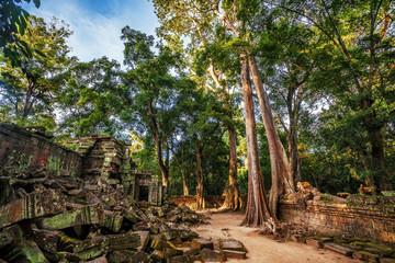 Jungle Forest at Angkor Wat Area