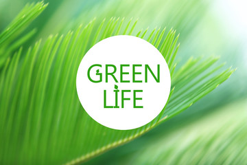 Palm leaves close-up, Green Life concept