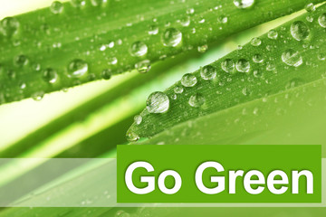 Fresh grass with dew drops, Go Green concept