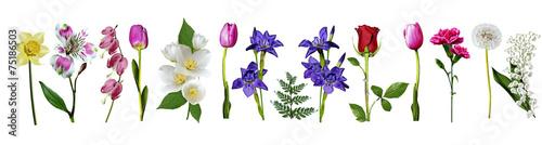 Deurstickers Lelietje van dalen flowers