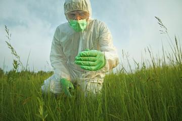 Scientist man examining green plants on summer field