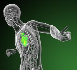 3d render medical illustration of the human heart