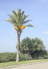Palm at Israel coast