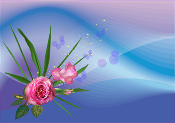 two pink roses on blue and lilac background