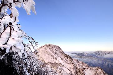 霧氷輝く尾瀬の山