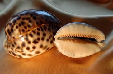 Морские ракушки Ципрея (Каури) на золотистом фоне.