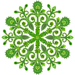 Snowflake from  green summer flowers