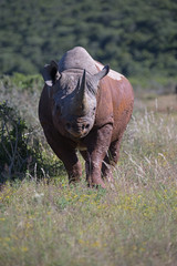 Black Rhino Challenge