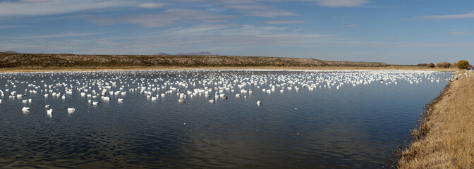 Migration of the cranes, New Mexico