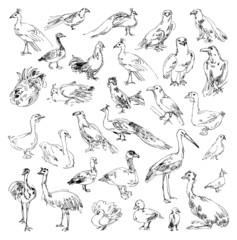 Wild birds. Zoo. Set. Hand-drawn. Set