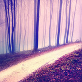 Fototapety Fantasy purple color forest road