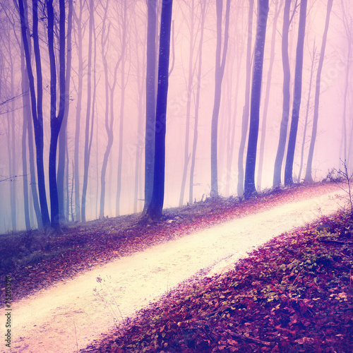 Fantasy purple color forest road
