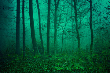 Mysterious green forest scene © robsonphoto