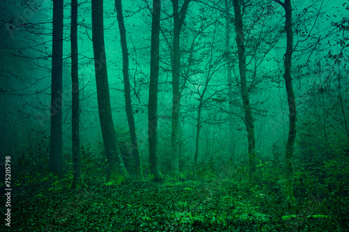 Mysterious green forest scene