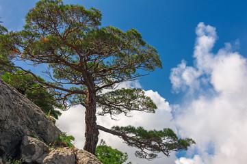 Горная растительность Крыма