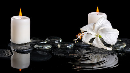 beautiful cryogenic spa concept of delicate white hibiscus, zen
