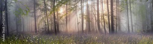 Magic Carpathian forest at dawn - 75207995