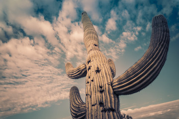 Epic saguaro cactus tree and beautiful sky