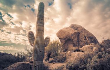 Saguaro cactus tree desert landscape,Arizona.