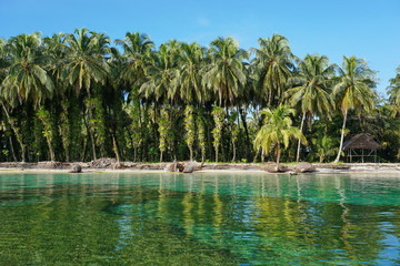 Coconut trees with epiphytes and hut on sea shore