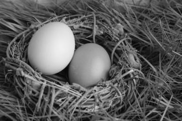 Vogelnest, Eier, schwarz weiß