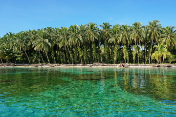 Lush coconut trees with epiphyte on tropical shore