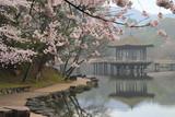 Fototapety 桜満開の浮見堂