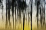 dawn in forest - 75216126