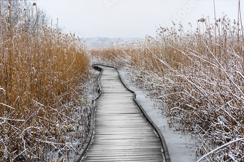 Boardwalk with frozen reeds - 75216123