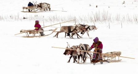 Reindeer and shepherds