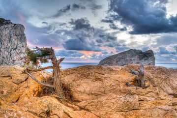 pine on the rocks by the shore