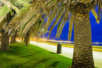 palm trees in Alghero seafront by night