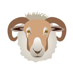 羊=Sheep