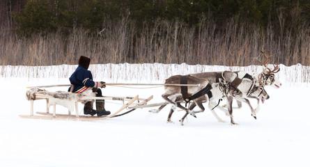 Racing of reindeer
