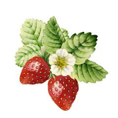 Strawberry. Watercolor