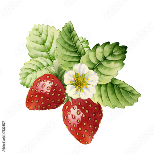 Plakát, Obraz Strawberry. Watercolor