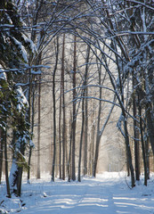 Snowfall in winter sun