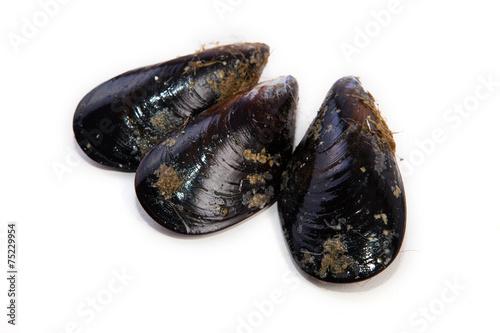 Leinwandbild Motiv Raw fresh mussels